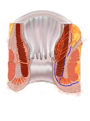 anatomie analkanal Haltern am See